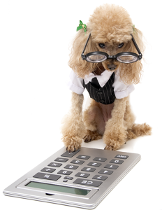 accountant-dog